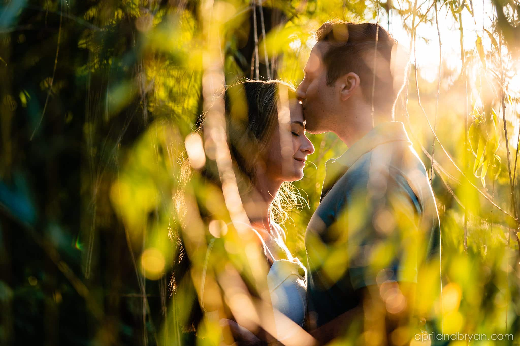 weeping willow engagement